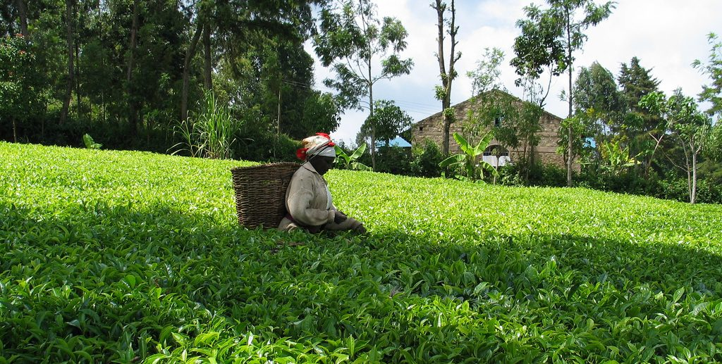 Employees of a Unilever tea plantation in Kenya turn to the UK Supreme Court in search of justice